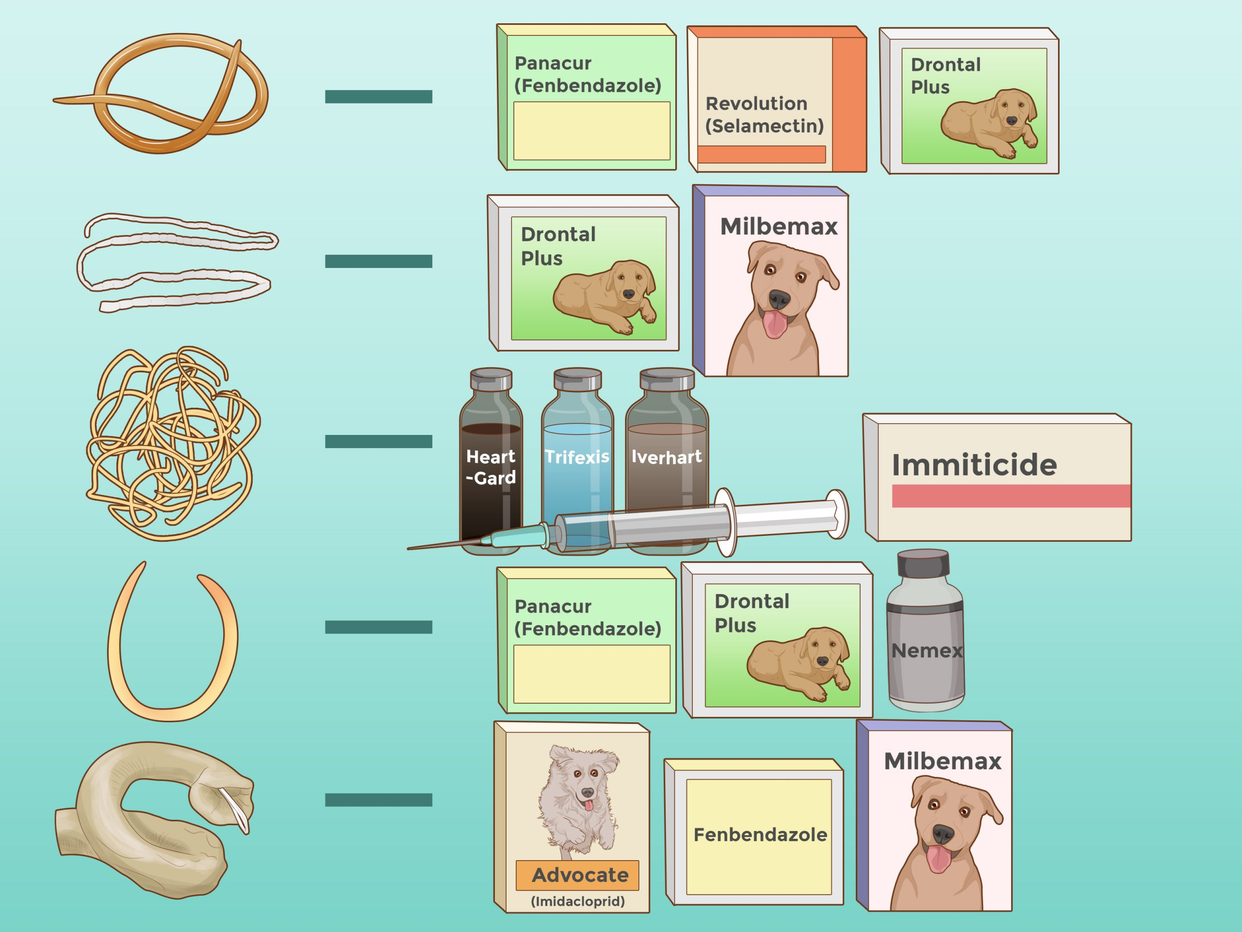 Worms in Dogs: How The Diet Can Help
