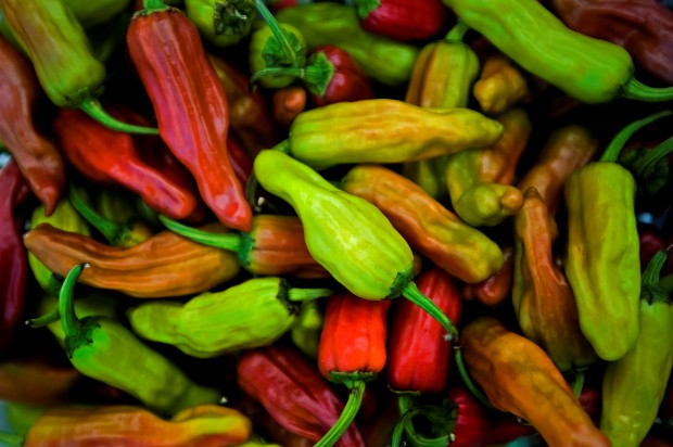 Thai Chilli Pepper – Brandon Menu & Order Online